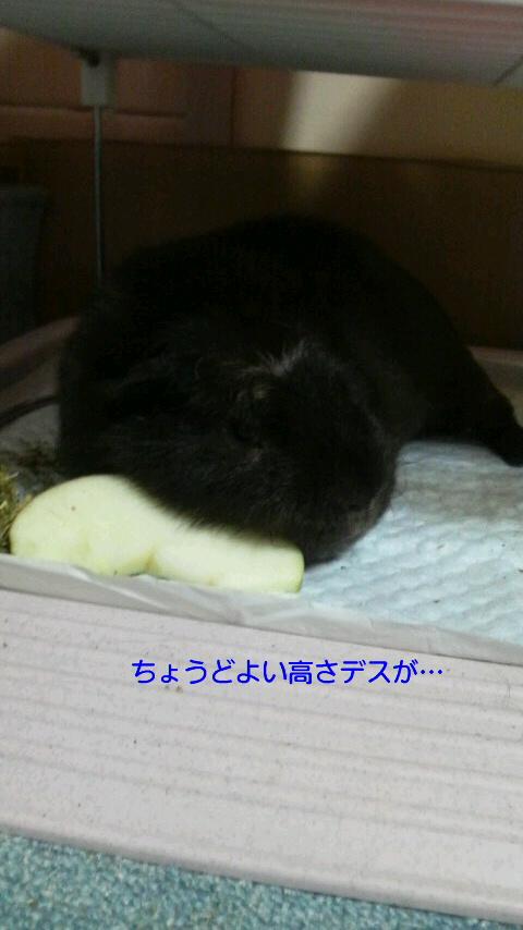枕なの!!