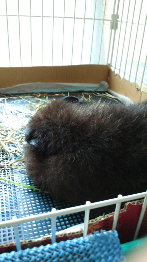 熊の昼寝?